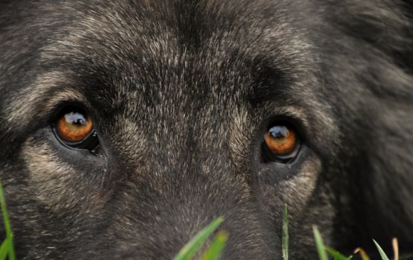 Teshko's beautiful eyes